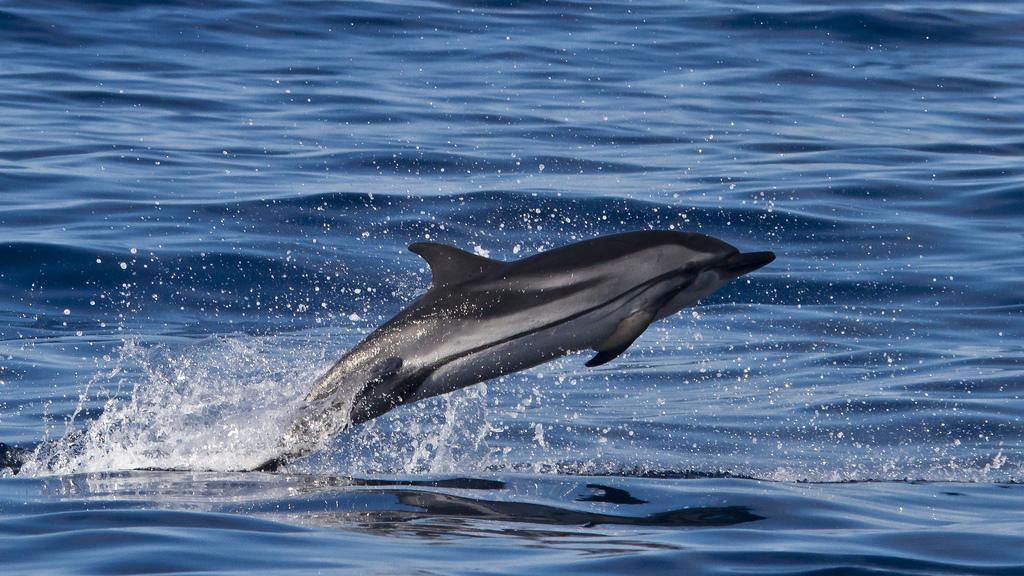 Szukacie delfinów? Są w Protaras! (film)