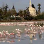 Widzieliście już flamingi na cypryjskim urlopie? (film)