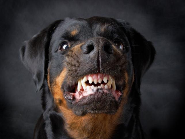 Zagryziona przez psy