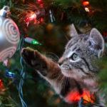 Choinka – idealne miejsce do zabawy dla kota (film)