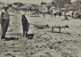 Kozy na znanej cypryjskiej plaży