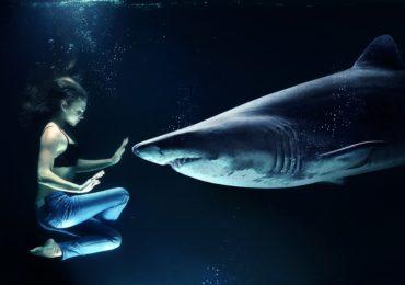 W Pafos złapano rekina (film)