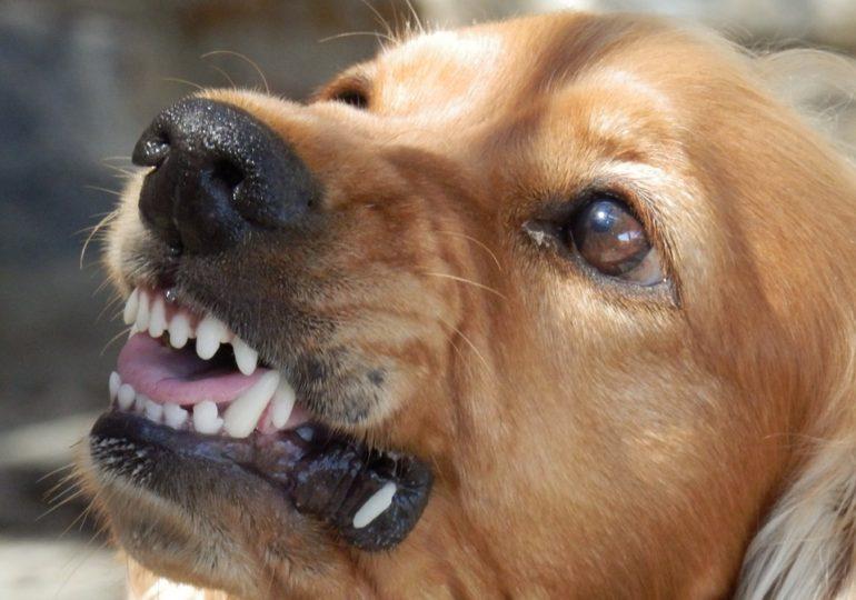 Limassol: uwaga na sforę psów!